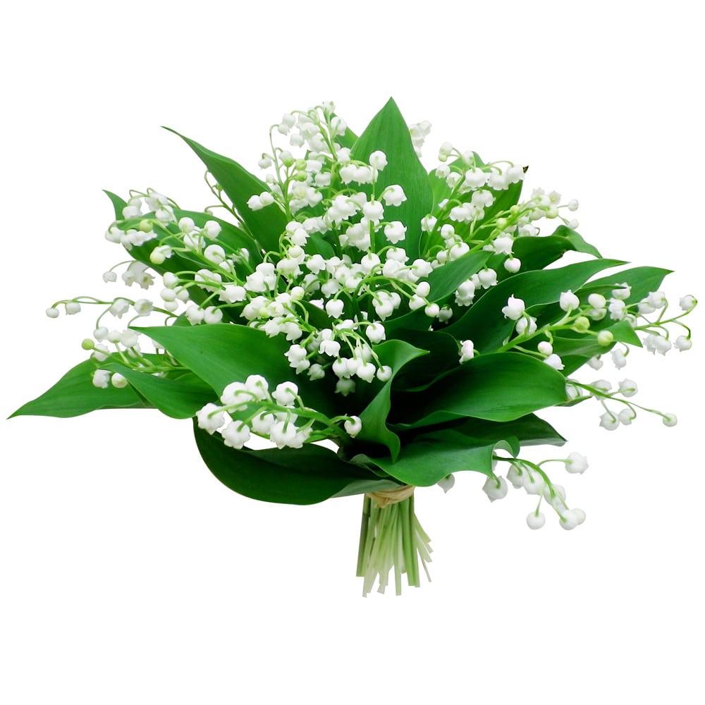 F te du travail 1er mai muguet porte bonheur for Bouquet de fleurs raiponce