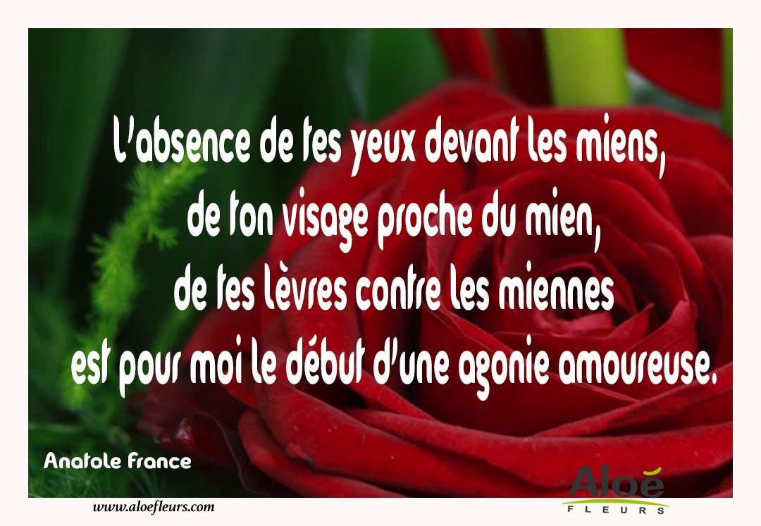 Citations D'amour Et Saint Valentin  L'absence De Tes Yeux Devant Les Miens