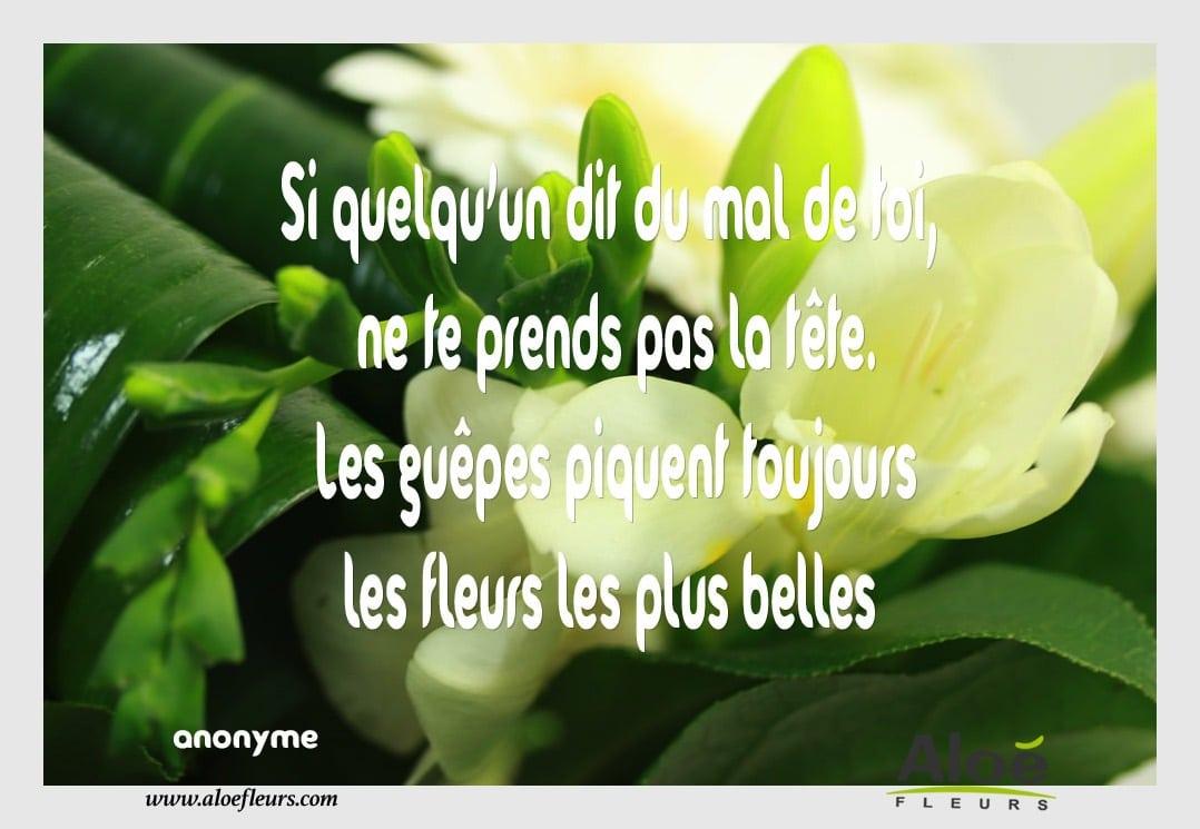 Les citations de fleurs en fleurs aloe fleurs for Les plus belles suites parentales