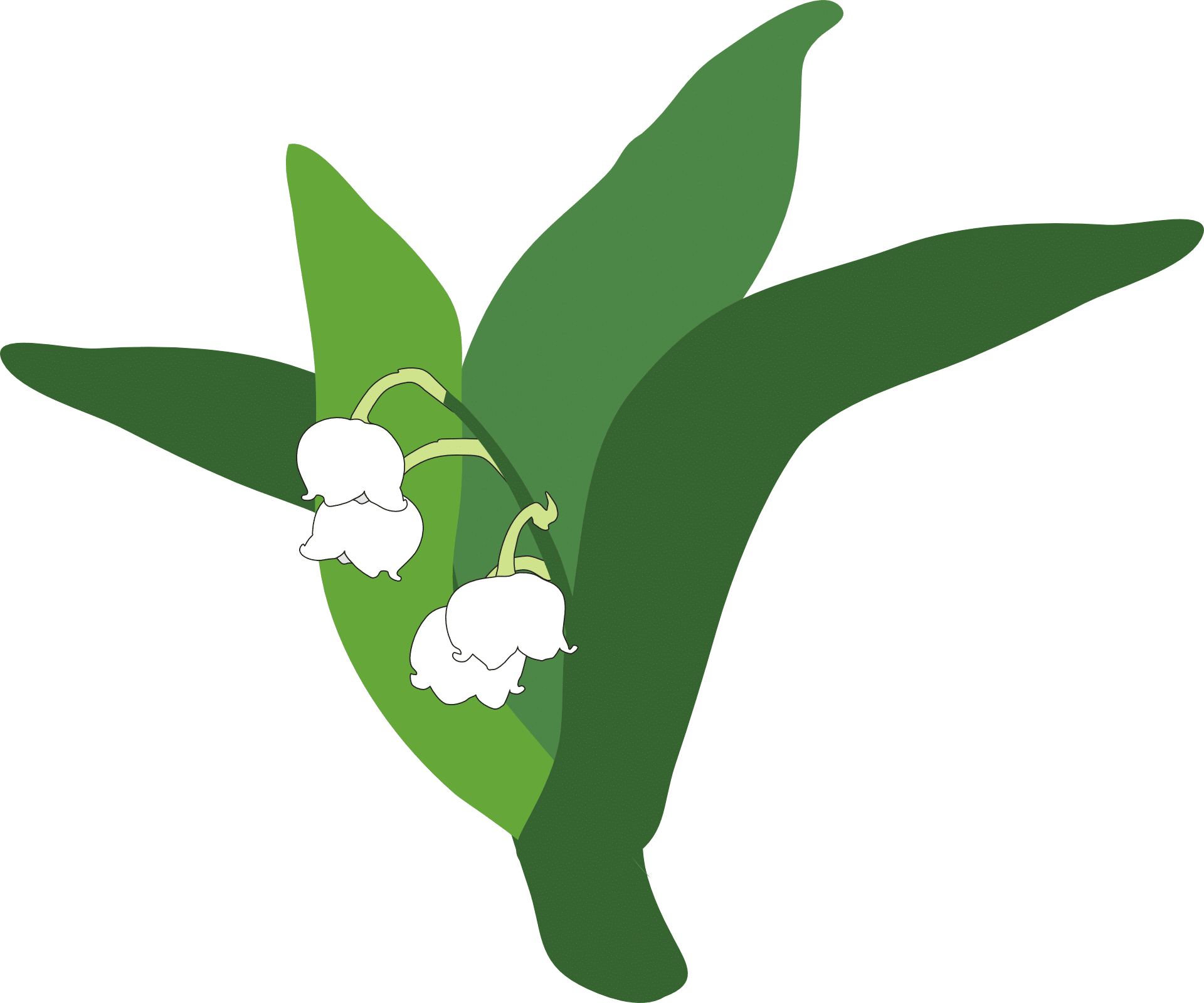 lily-of-the-valley-335215