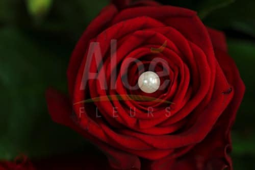 Bouquet Glamour 500  2