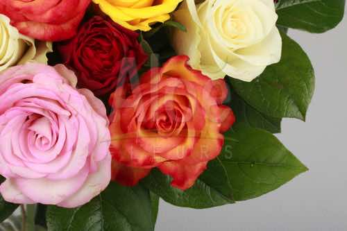 Bouquet Rose Multi 500  12