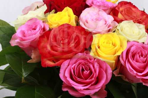 Bouquet Rose Multi 500  17