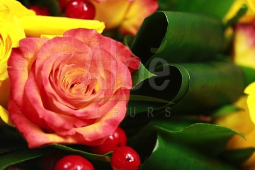 Bouquet Rose Orange & Jaune 500  15