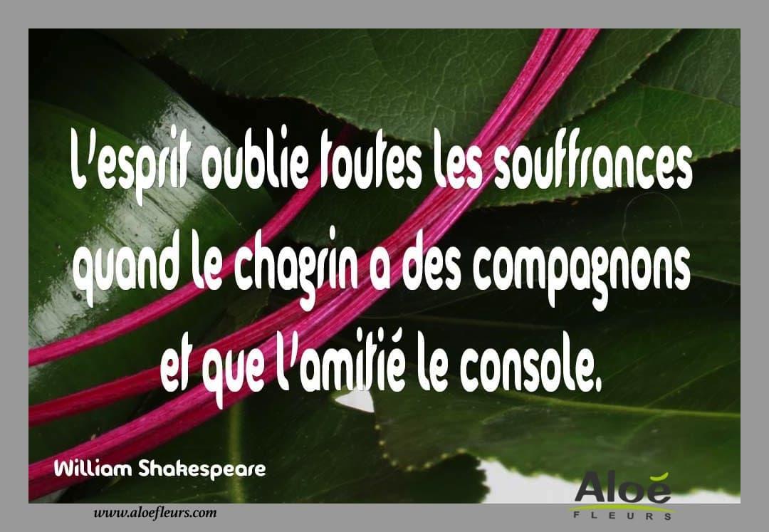 Messages Citations Poemes Pour Le Deuil Aloe Fleurs