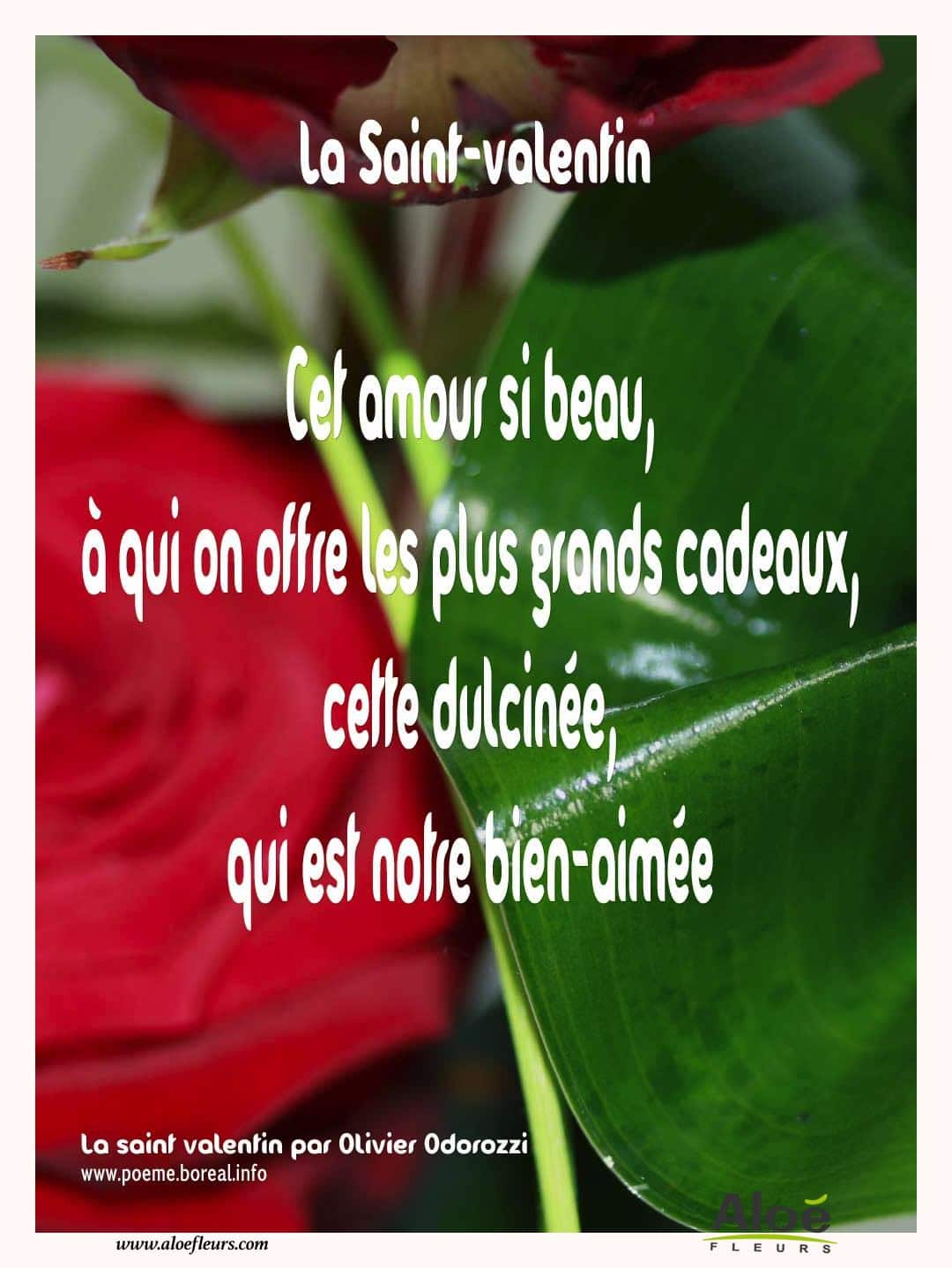 Citations D'amour Et Saint Valentin  Cet Amour Si Beau