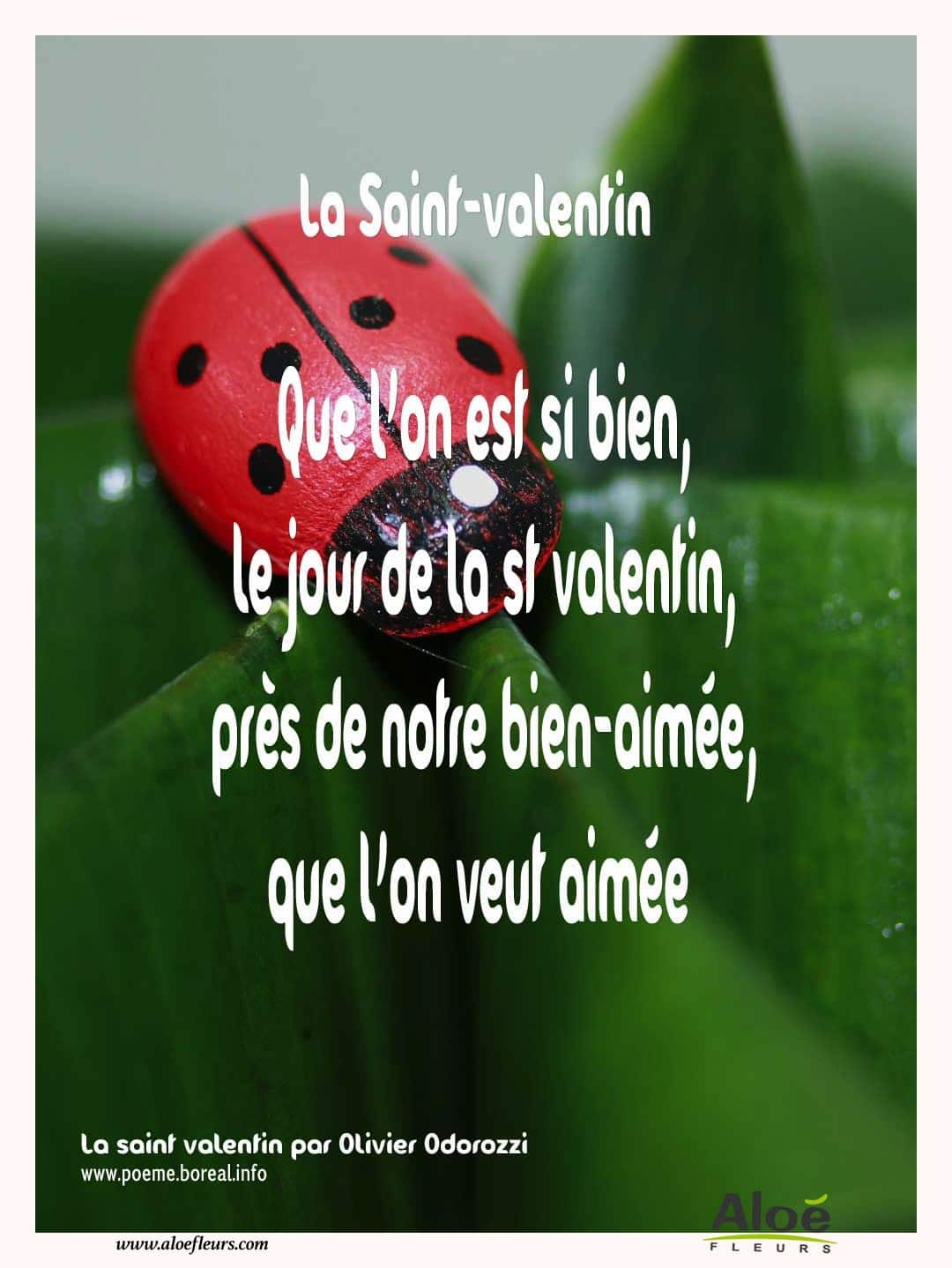Citations D'amour Et Saint Valentin  La Saint Valentin 2