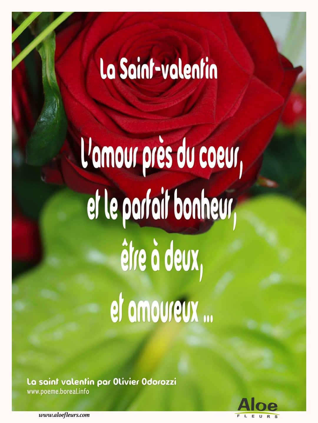 Citations D'amour Et Saint Valentin  La Saint Valentin