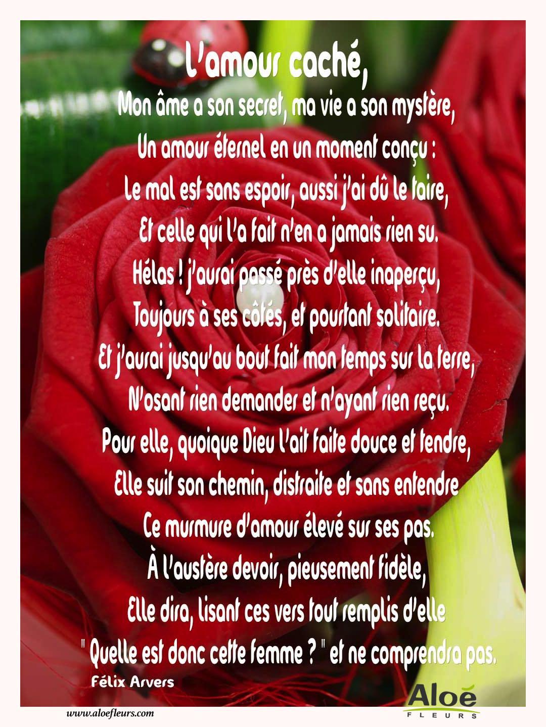 Citations D Amour Et Saint Valentin L Amour Caché Aloe Fleurs