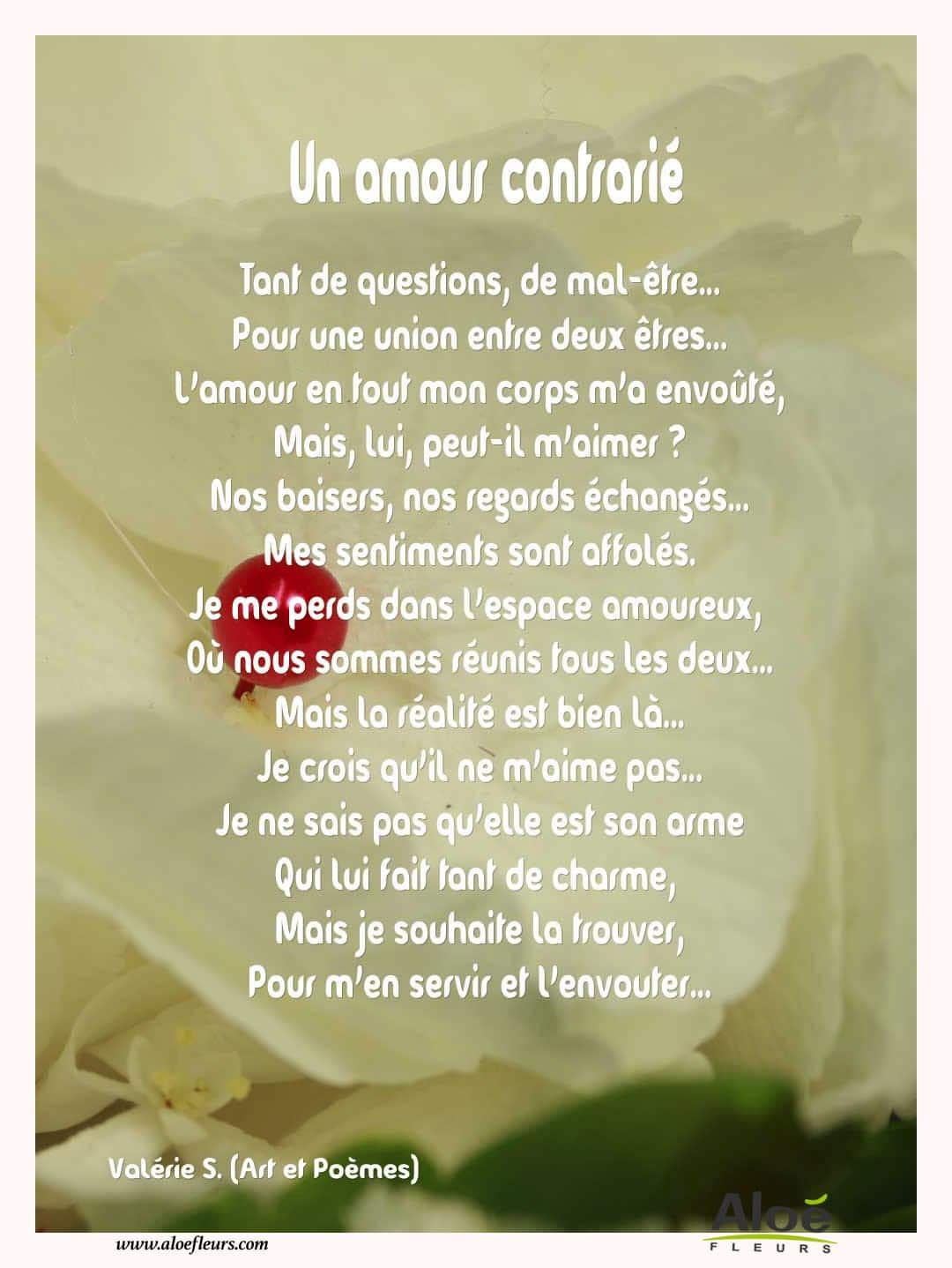 Citations D'amour Et Saint Valentin  Un Amour Contrarié