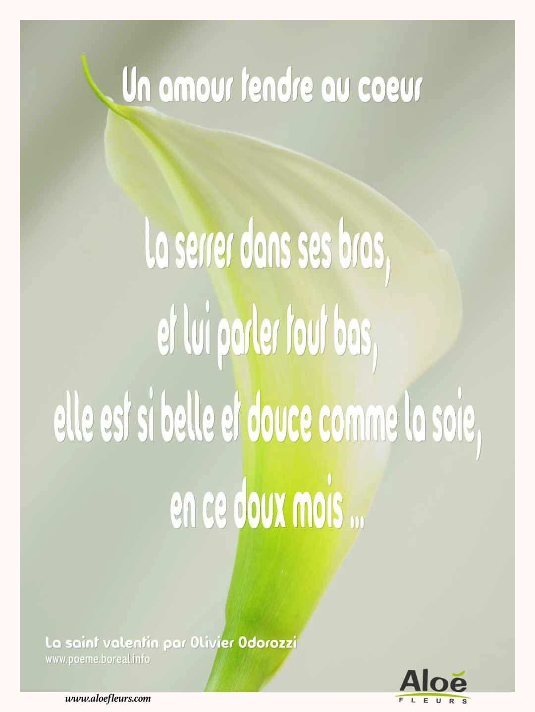 Citations D'amour Et Saint Valentin  Un Amour Tendre Au Coeur